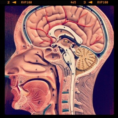 Brain Image - SW
