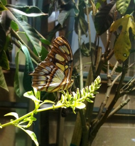 National Museum of Natural History - Butterfly Garden