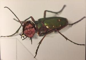 kim bug